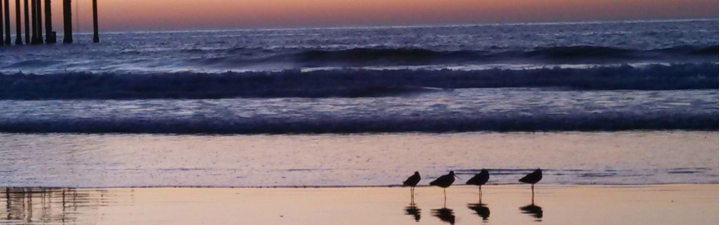 Scripps beach with roosting seagulls